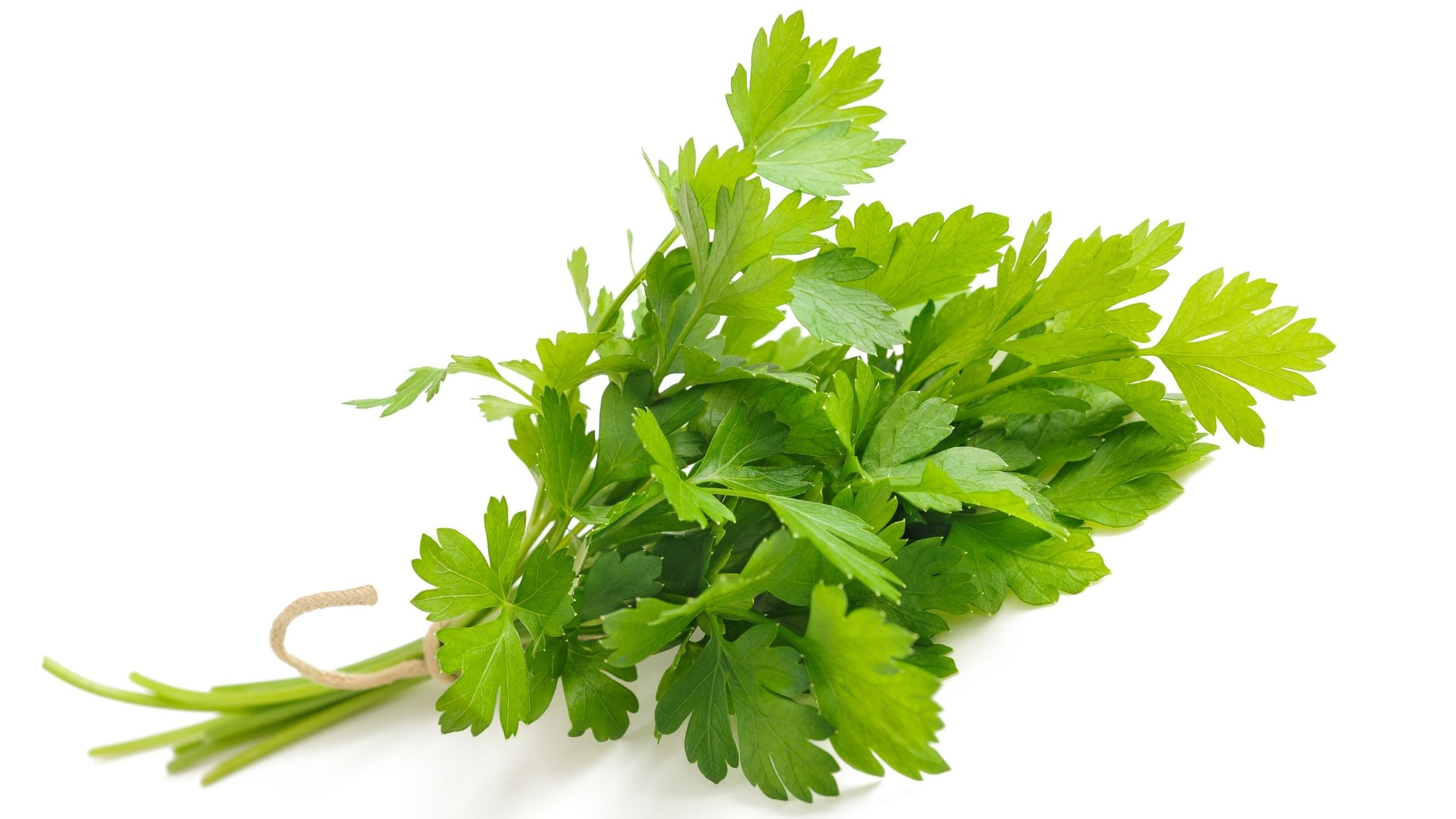 Benefits of Parsley on The Keto Diet